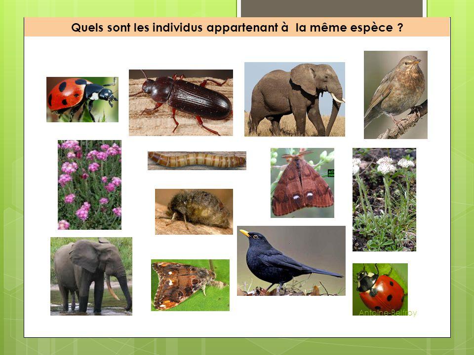 Quels sont les individus appartenant à la même espèce ? Antoine-Belfroy