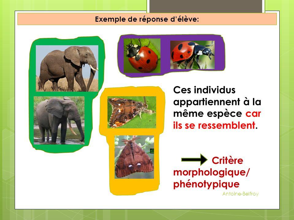 Exemple de réponse d'élève: Ces individus appartiennent à la même espèce car ils se ressemblent. Critère morphologique/ phénotypique Antoine-Belfroy