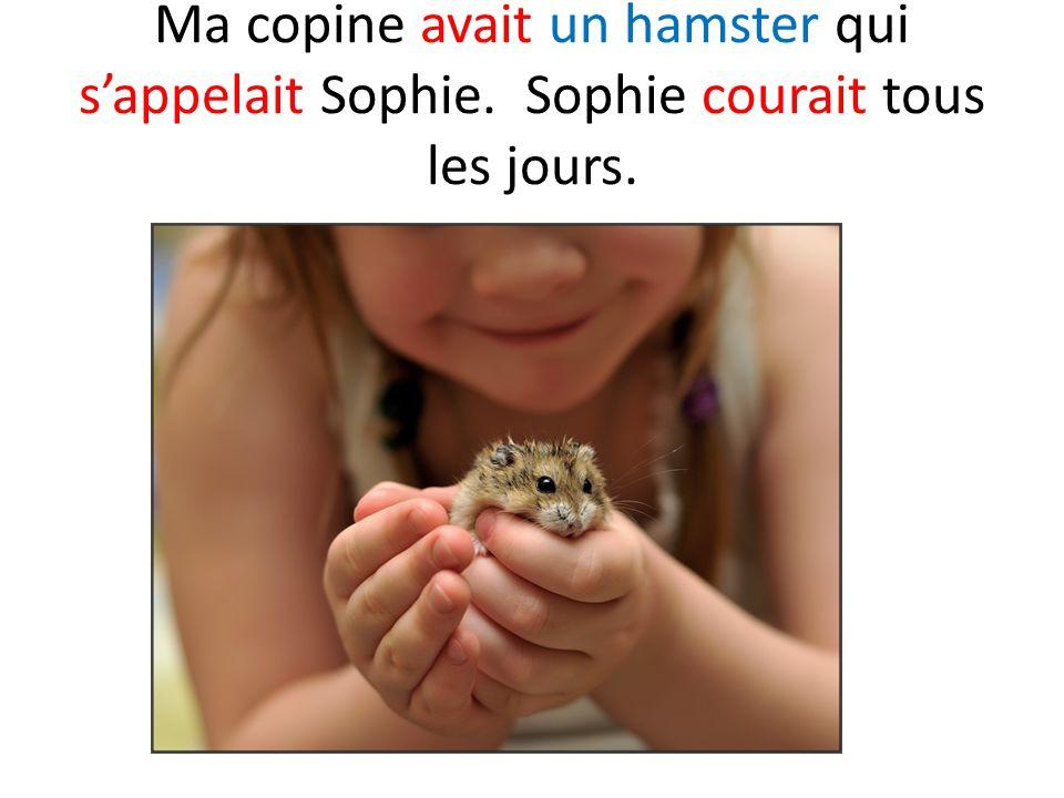 Ma copine avait un hamster qui s'appelait Sophie. Sophie courait tous les jours.
