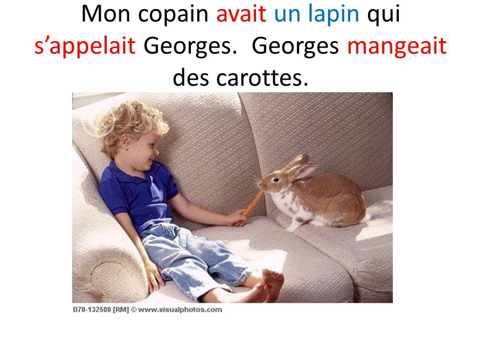 Mon copain avait un lapin qui s'appelait Georges. Georges mangeait des carottes.