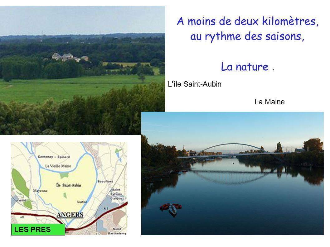 A moins de deux kilomètres, au rythme des saisons, La nature. L île Saint-Aubin La Maine LES PRES