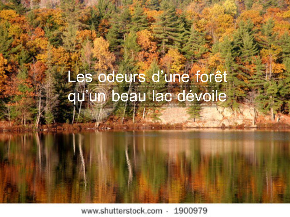 Les odeurs d'une forêt qu'un beau lac dévoile