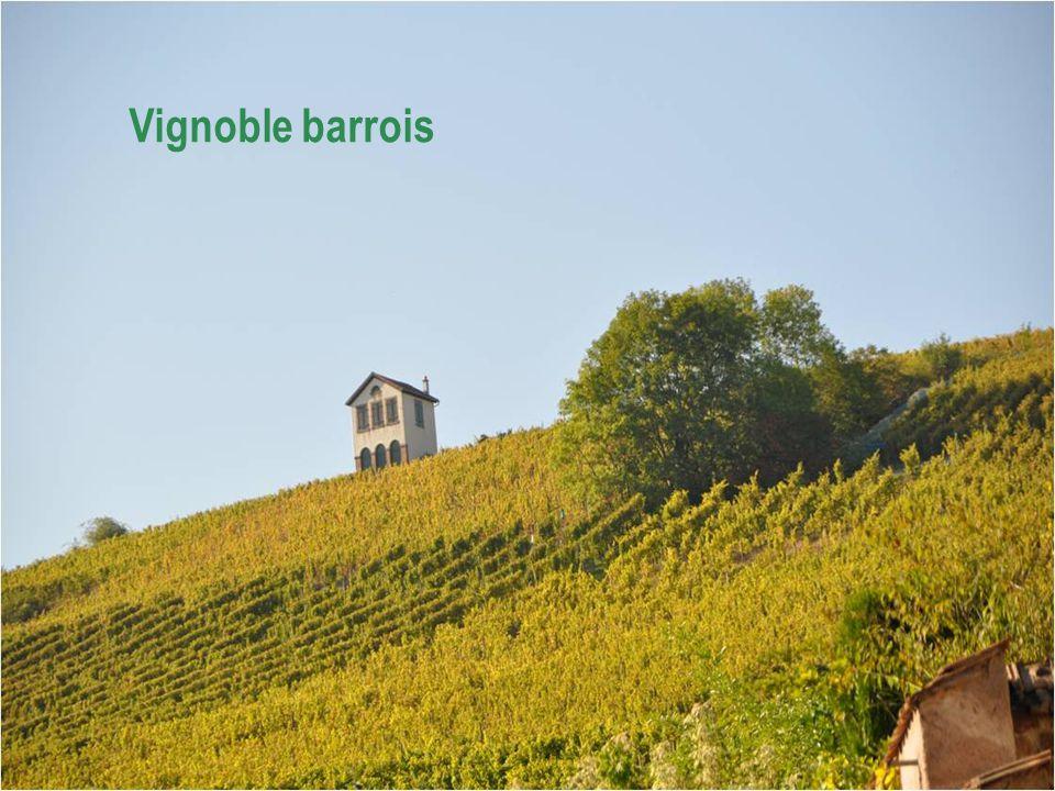 BARR est la capitale viticole du Bas Rhin.