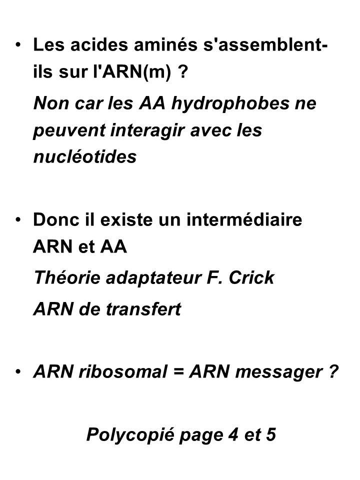 Correspondance entre AN et AA : les ≠ hypothèses 4 nucléotides 20 AA 1 NUCL ≠ (4 1 = 4) 2 NUCL ≠ (4 2 = 16) 3 NUCL  (4 3 = 64)