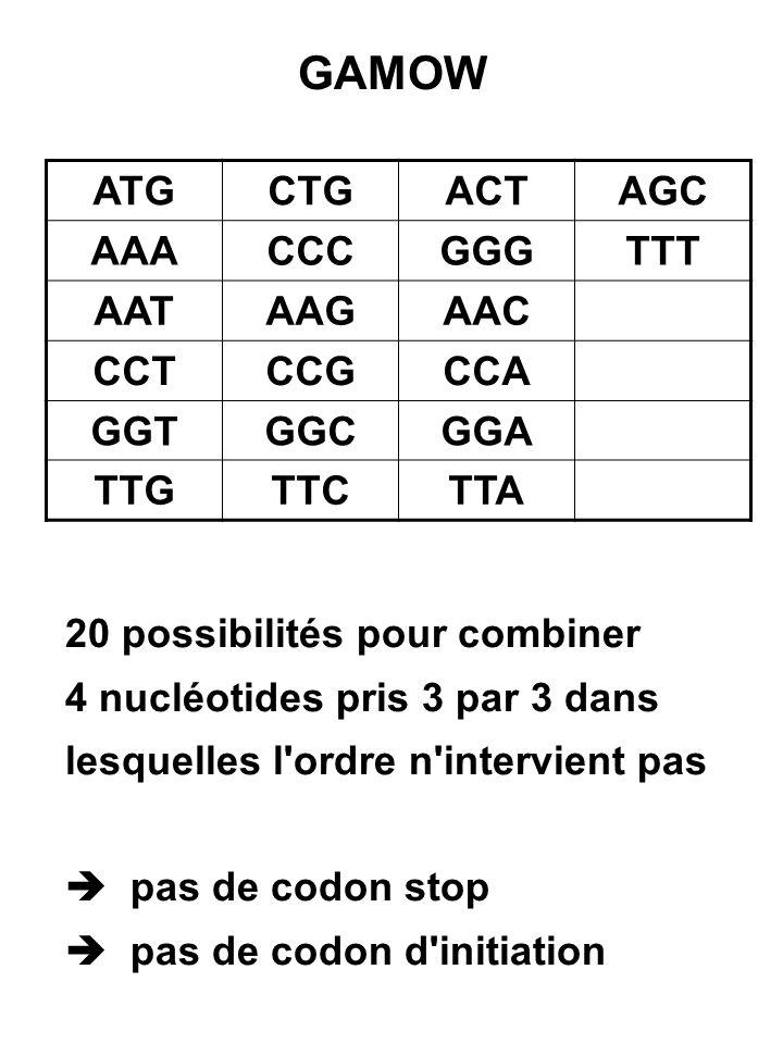 Pour la solution proposée, ATG par exemple, code un acide aminé quelque soit l ordre des 3 nucléotides (ATG, TAG, AGT, GAT, GTA, TGA codent le même acide aminé ou bien les permutations ne sont pas codantes) Cette idée de correspondance entre les 20 possibilités et les 20 acides aminés différents retint l attention des scientifiques pendant quelque temps.