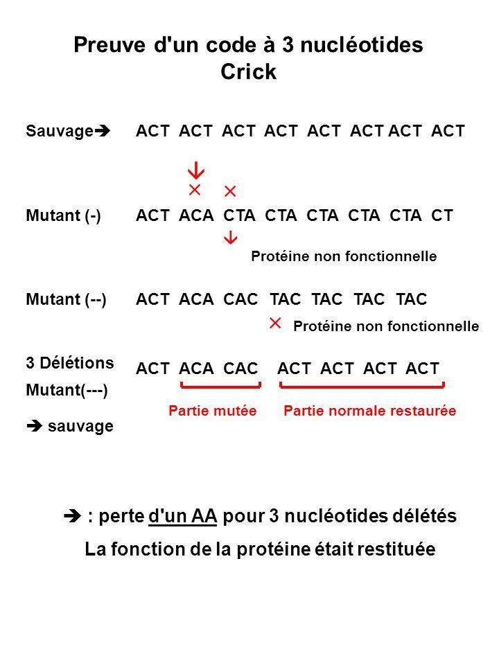 3ème lettre codon (3 ) Anticodon Correspondant 5 AGAG U GC UA UCUCG UCAUCA I
