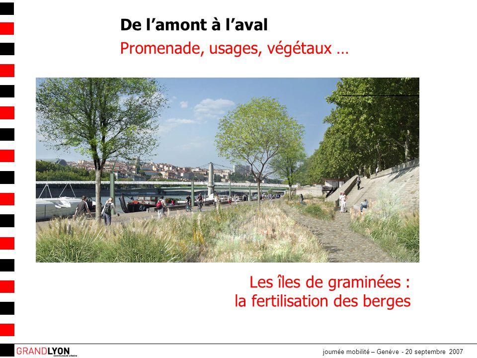 journée mobilité – Genève - 20 septembre 2007 De l'amont à l'aval Promenade, usages, végétaux … Les îles de graminées : la fertilisation des berges