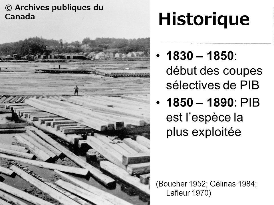 Historique 1830 – 1850: début des coupes sélectives de PIB 1850 – 1890: PIB est l'espèce la plus exploitée © Archives publiques du Canada (Boucher 1952; Gélinas 1984; Lafleur 1970)
