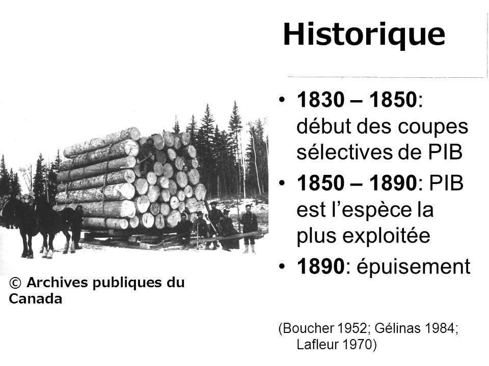 Historique 1830 – 1850: début des coupes sélectives de PIB 1850 – 1890: PIB est l'espèce la plus exploitée 1890: épuisement (Boucher 1952; Gélinas 1984; Lafleur 1970) © Archives publiques du Canada