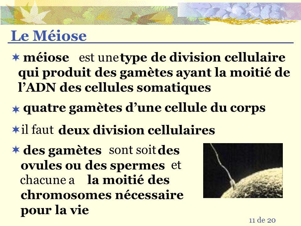10 de 20 Étapes du Mitose Interphase : cellule originale avec les chromosomes simples Prophase: dédoublement des chromosomes et devient visible Métaph