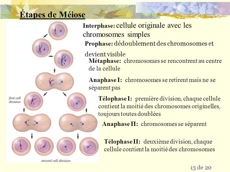 12 de 20  les s'unissent pour former un zygote ayant le nombre complète de chromosomes gamètes des parents