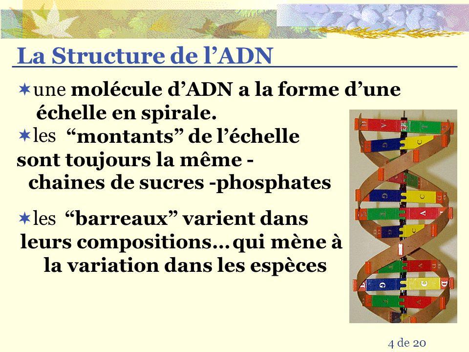 La Structure de l'ADN  une 4 de 20  les molécule d'ADN a la forme d'une échelle en spirale.