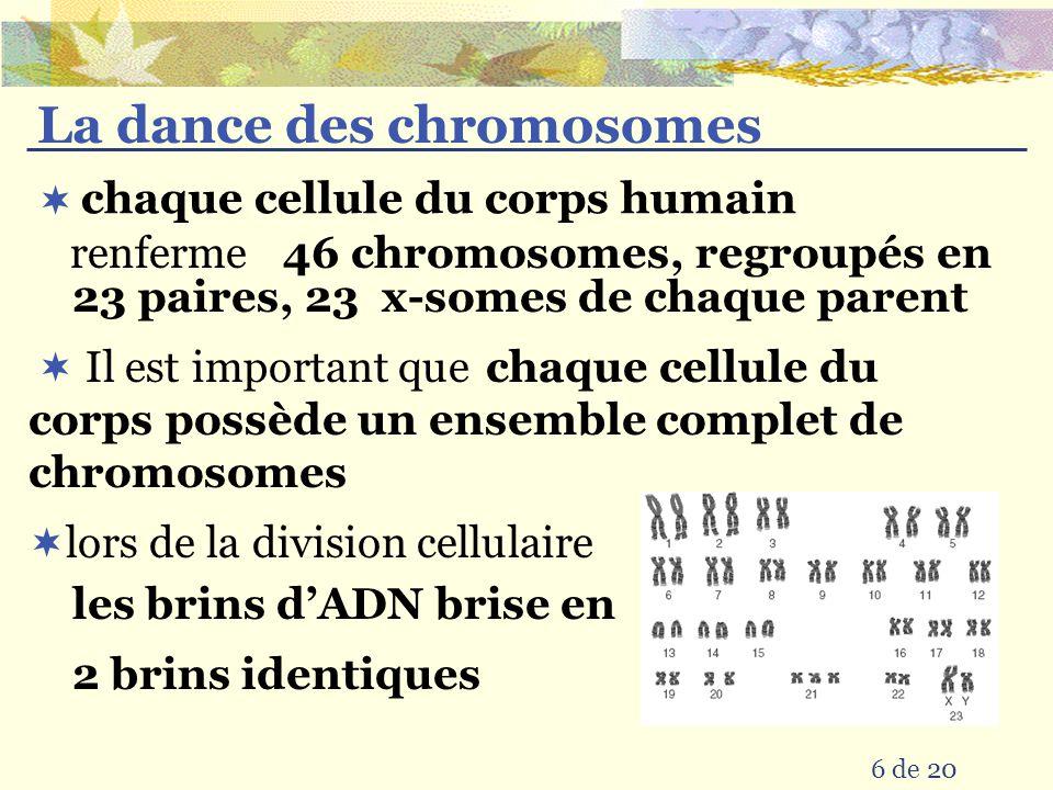 La dance des chromosomes  renferme 6 de 20  lors de la division cellulaire  Il est important que 46 chromosomes, regroupés en chaque cellule du corps humain chaque cellule du corps possède un ensemble complet de chromosomes 23 paires, 23 x-somes de chaque parent les brins d'ADN brise en 2 brins identiques