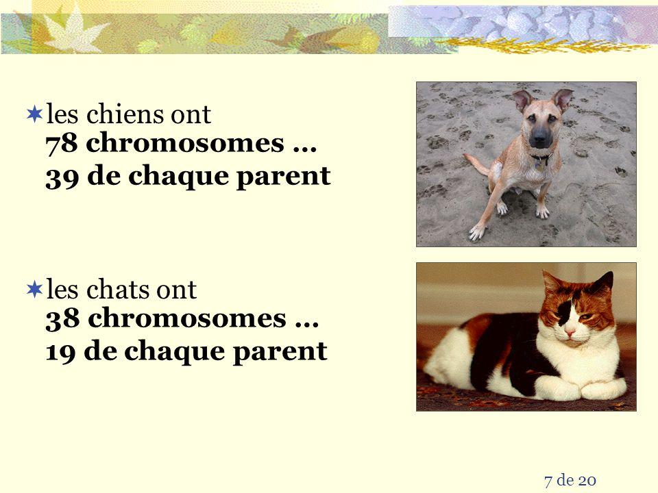 7 de 20  les chiens ont 78 chromosomes … 39 de chaque parent  les chats ont 38 chromosomes … 19 de chaque parent