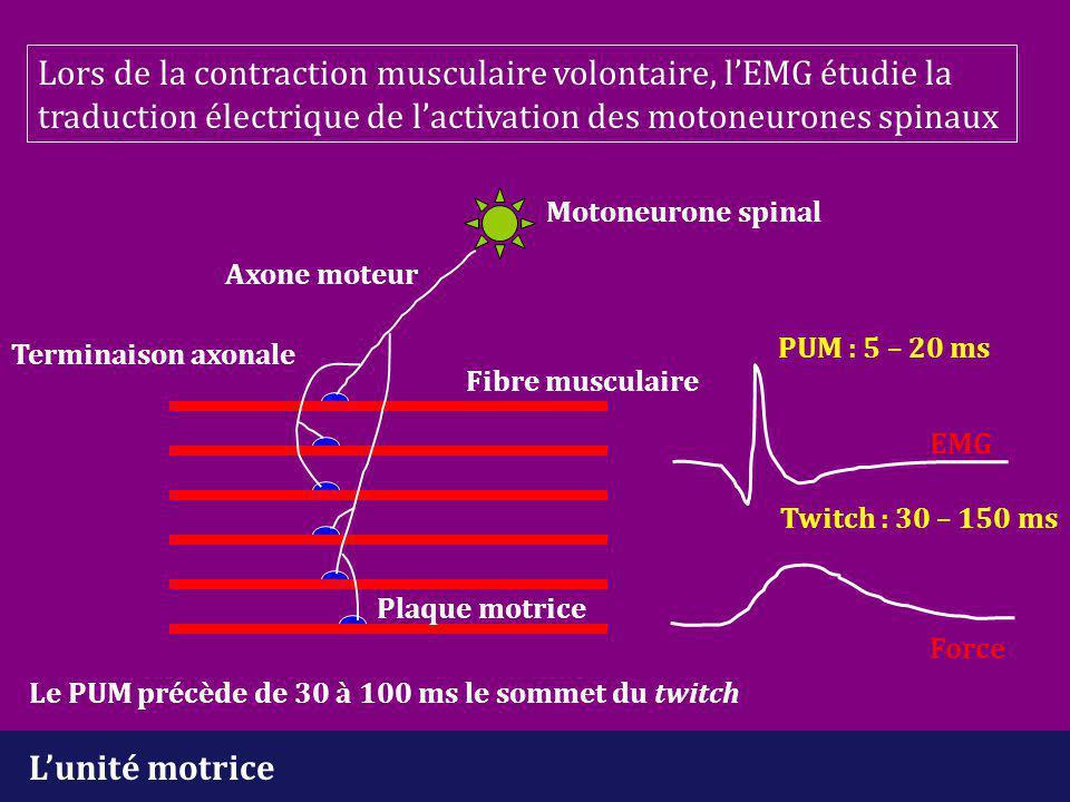 L'unité motrice Motoneurone spinal Axone moteur Plaque motrice Terminaison axonale Fibre musculaire EMG Force Lors de la contraction musculaire volont
