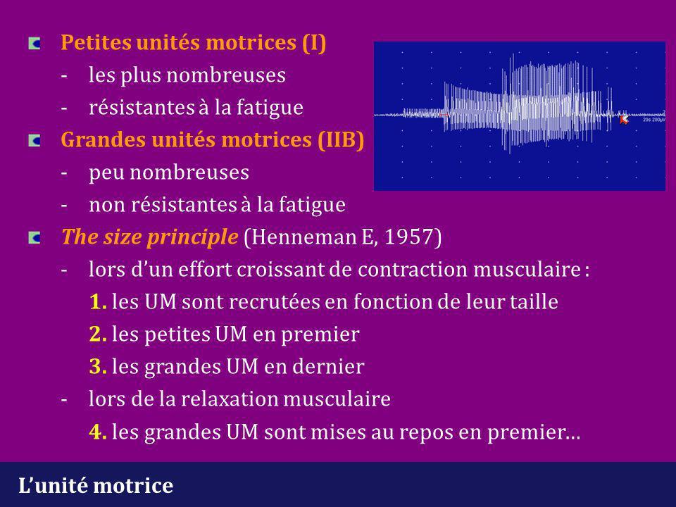 L'unité motrice Petites unités motrices (I) - les plus nombreuses -résistantes à la fatigue Grandes unités motrices (IIB) -peu nombreuses -non résista