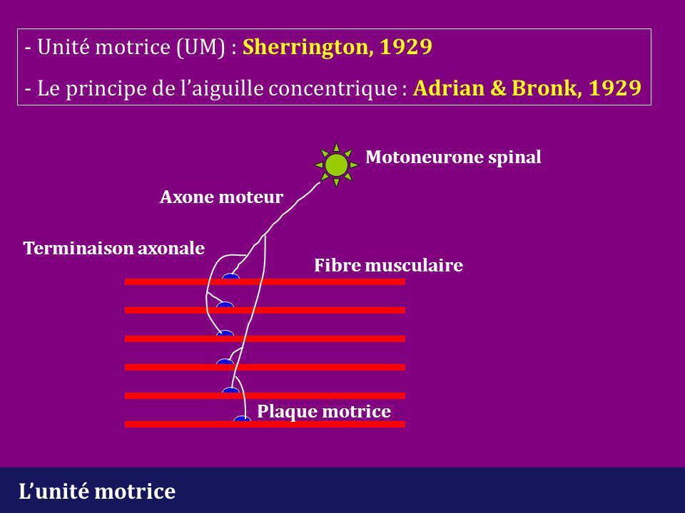 Processus pathologiques Myopathies - perte de fibres musculaires (fm) fonctionnelles -réduction de la taille des unités motrices (UM) -> PUM d'amplitude et de durée réduites -nombre d'UM inchangé ou subnormal - fm de diamètre variable -> PUM polyphasiques Neuropathies -dénervation musculaire -> perte d'UM -> tracés appauvris -réinnervation musculaire -> augmentation de la taille des UM -> PUM polyphasiques et instables (réinnervation débutante), PUM d'amplitude et de durée augmentées (réinnervation plus ancienne)