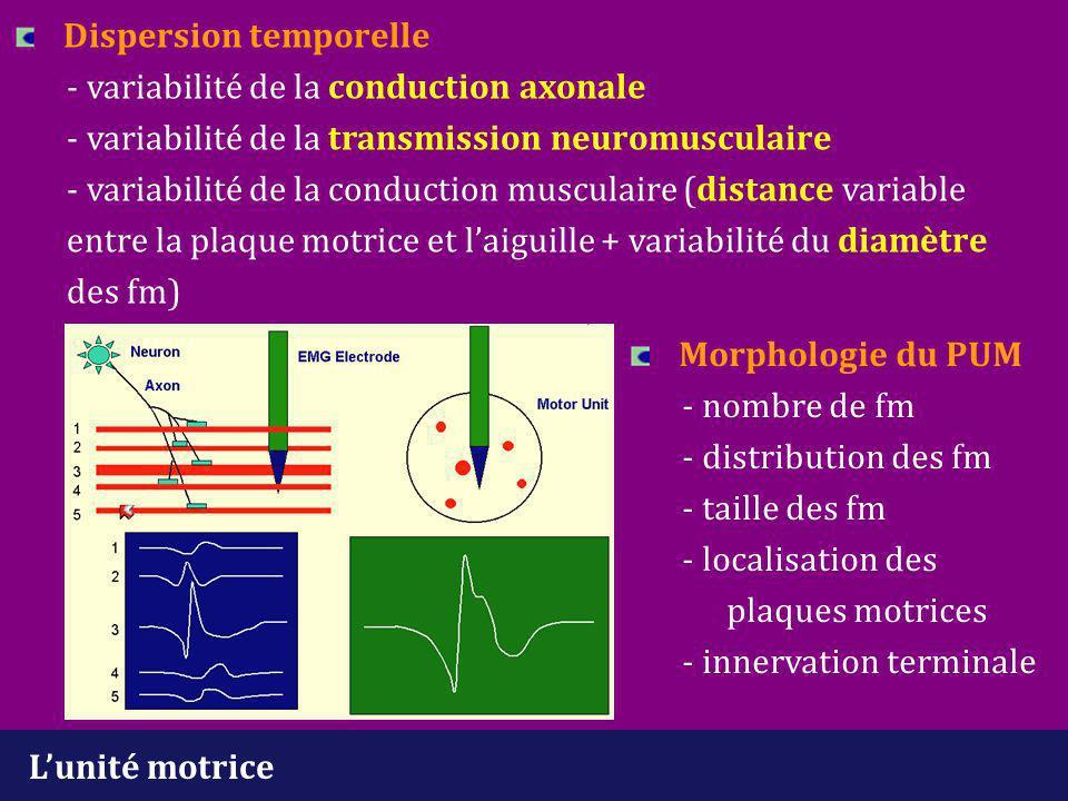 Processus pathologiques particuliers Trouble de la transmission neuromusculaire -bloc permanent : perte en fm fonctionnelle -> augmentation du nombre d'UM de petite taille -bloc intermittent : PUM instable - nombre normal d'UM Taille des UM -> amplitude et durée des PUM Nombre d'UM -> richesse des tracés volontaires Architecture des UM -> polyphasiques (réinnervation débutante ou variabilité du diamètre des fm) et instabilité de la morphologie (réinnervation débutante ou trouble de transmission neuromusculaire) Fréquence de décharge des UM