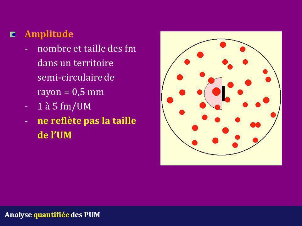 Amplitude -nombre et taille des fm dans un territoire semi-circulaire de rayon = 0,5 mm - 1 à 5 fm/UM - ne reflète pas la taille de l'UM Analyse quant