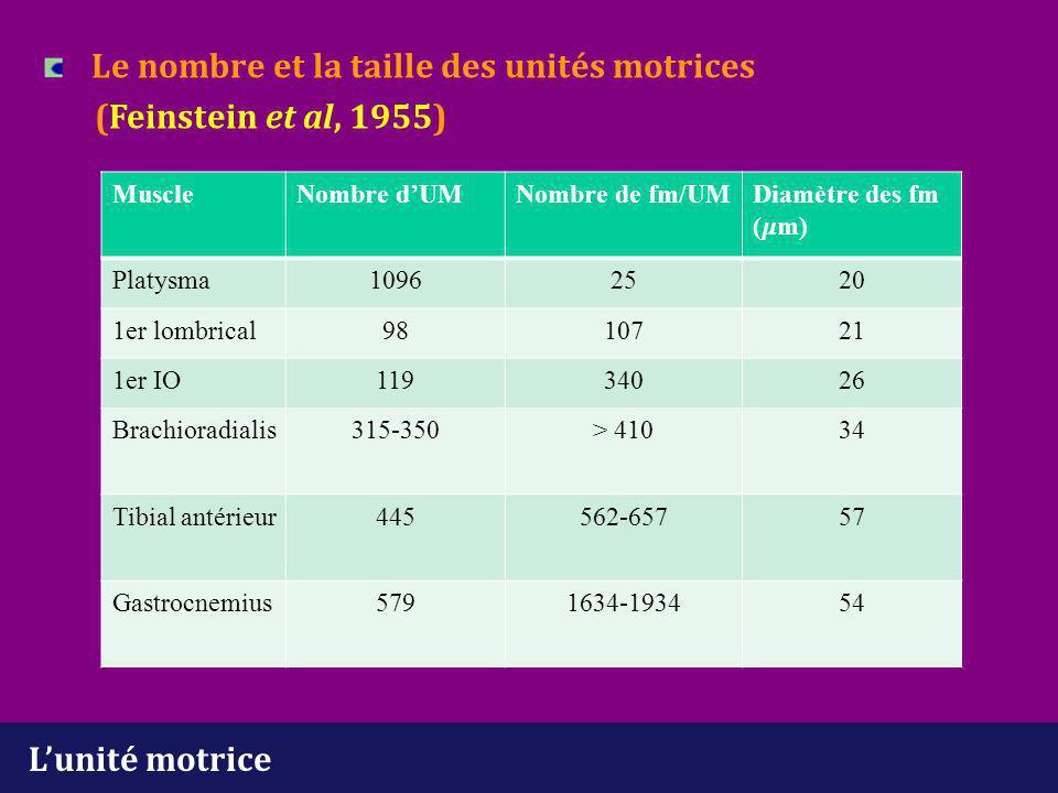 L'unité motrice Le nombre et la taille des unités motrices (Feinstein et al, 1955) MuscleNombre d'UMNombre de fm/UMDiamètre des fm (m) Platysma1096252