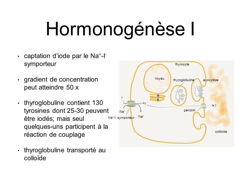 noyau RERE thyroglobulineexocytose colloïde thyrocyte Na + I-I- I-I- I-I- Na + -I - symporteur pendrin Hormonogénèse I captation d'iode par le Na + -I - symporteur gradient de concentration peut atteindre 50 x thyroglobuline contient 130 tyrosines dont 25-30 peuvent être iodés; mais seul quelques-uns participent à la réaction de couplage thyroglobuline transporté au colloïde
