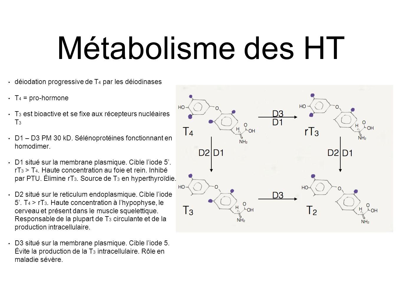 Métabolisme des HT déiodation progressive de T 4 par les déiodinases T 4 = pro-hormone T 3 est bioactive et se fixe aux récepteurs nucléaires T 3 D1 – D3 PM 30 kD.