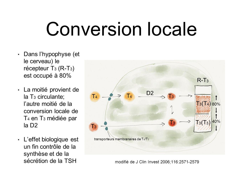 Conversion locale Dans l'hypophyse (et le cerveau) le récepteur T 3 (R-T 3 ) est occupé à 80% La moitié provient de la T 3 circulante; l'autre moitié de la conversion locale de T 4 en T 3 médiée par la D2 L'effet biologique est un fin contrôle de la synthèse et de la sécrétion de la TSH R-T 3 T3T3 T3T3 T3T3 T4T4 T4T4 D2 T 3 (T 3 ) T 3 (T 4 ) 40% 80% transporteurs membranaires de T 4 /T 3 modifié de J Clin Invest 2006;116:2571-2579