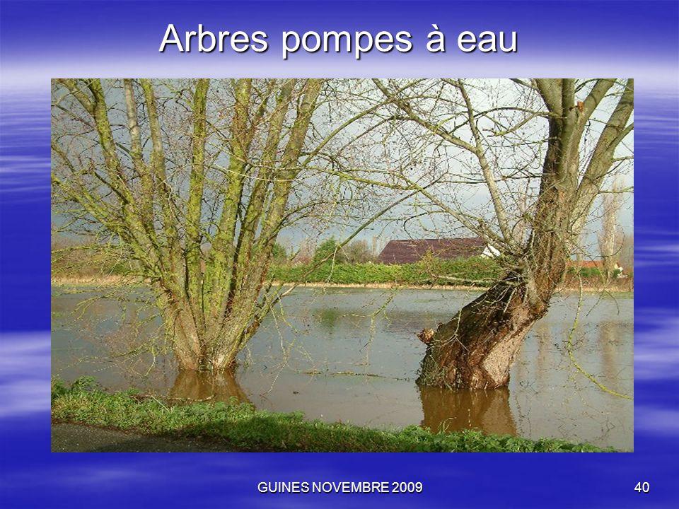 GUINES NOVEMBRE 200940 Arbres pompes à eau