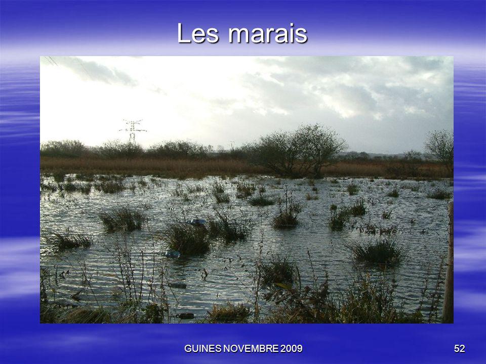 GUINES NOVEMBRE 200952 Les marais