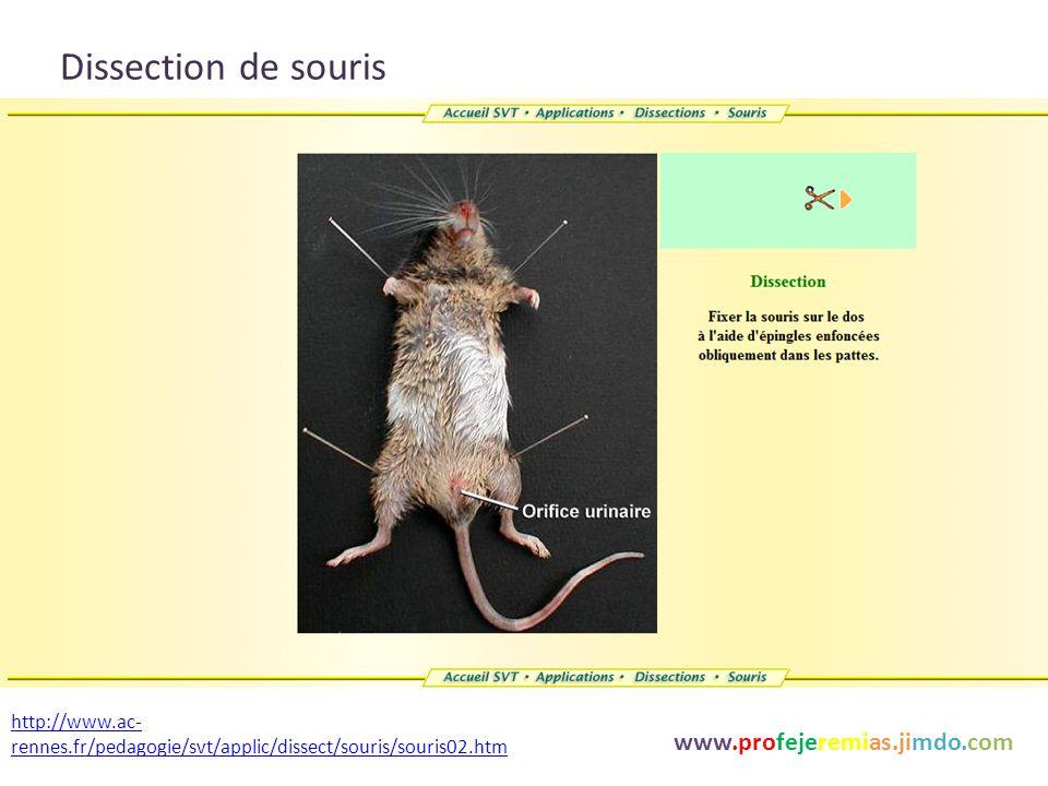 www.profejeremias.jimdo.com La digestion des aliments et le devenir des nutriments La transformation Mecanique