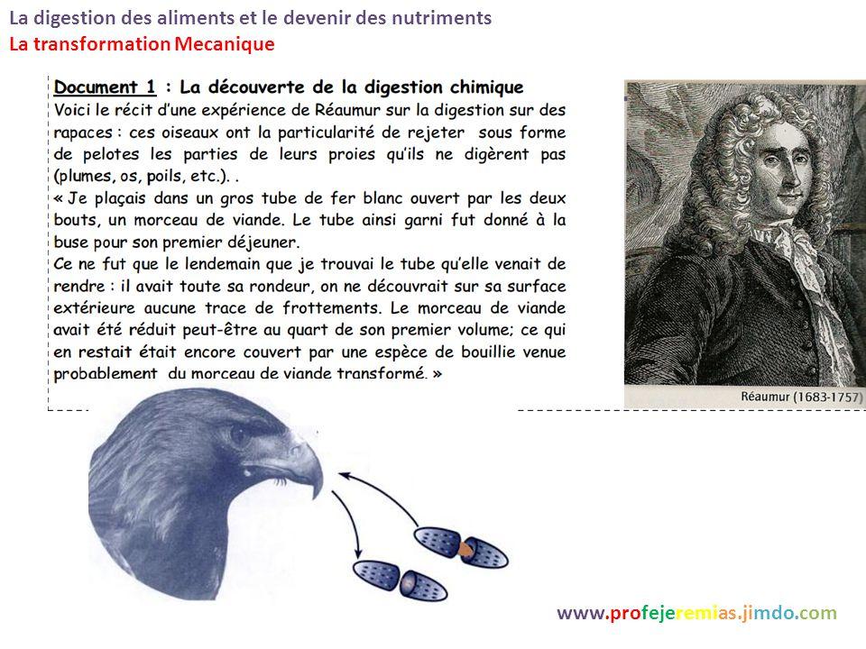 La digestion des aliments et le devenir des nutrimentswww.profejeremias.jimdo.com documents 1 et 2 p 86