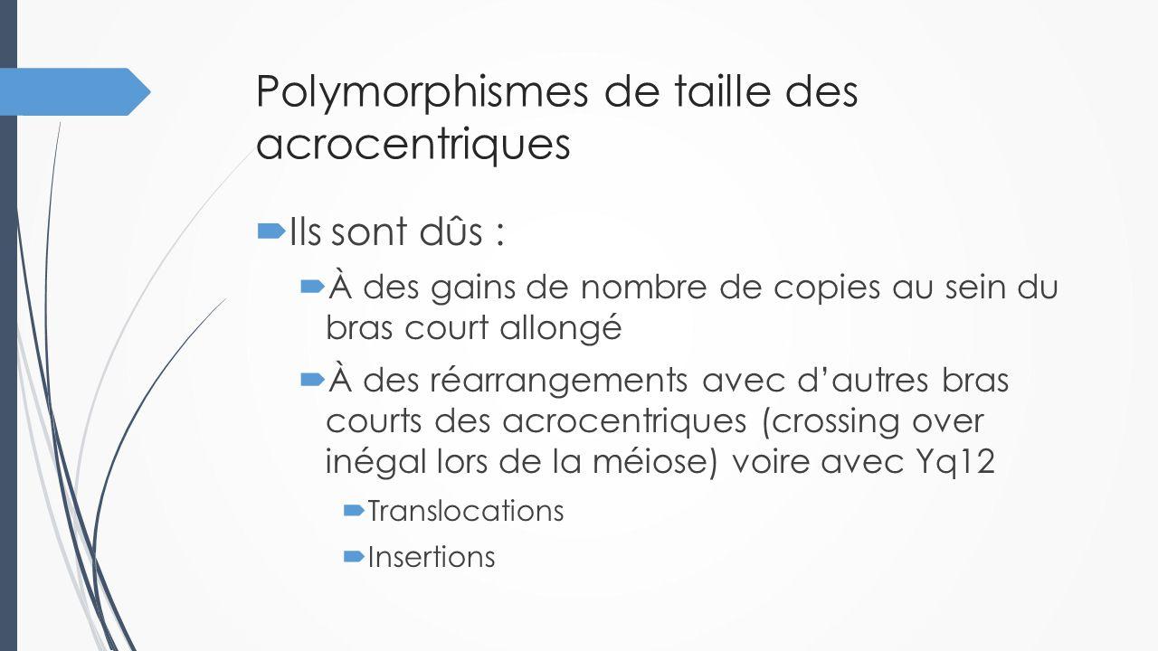  Doivent leur bénignité  À la grande pauvreté en gènes de ces régions  Au caractère redondant dans le génome de ces régions  au caractère non dose-dépendant des régions concernées par ces remaniements  La taille normale d'un acrocentrique ne garantit pas l'absence d'anomalie  Risque de confondre des dérivés de translocations pathologiques avec ces polymorphismes Polymorphismes de taille des acrocentriques