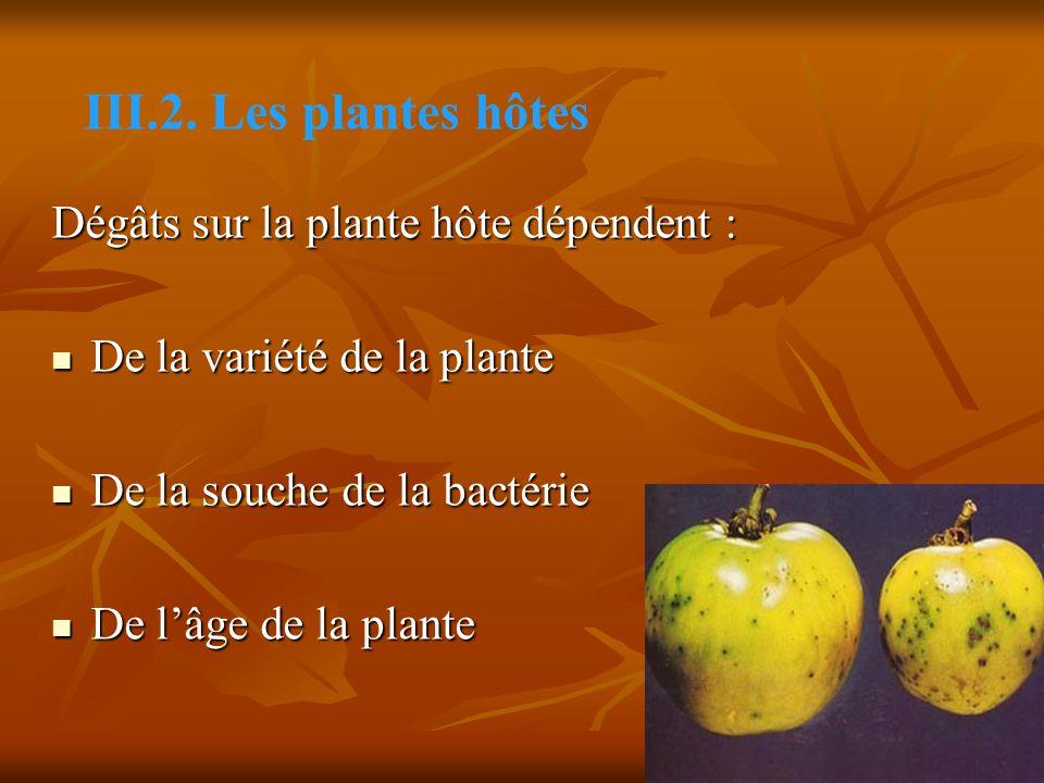 Dégâts sur la plante hôte dépendent : De la variété de la plante De la variété de la plante De la souche de la bactérie De la souche de la bactérie De l'âge de la plante De l'âge de la plante III.2.