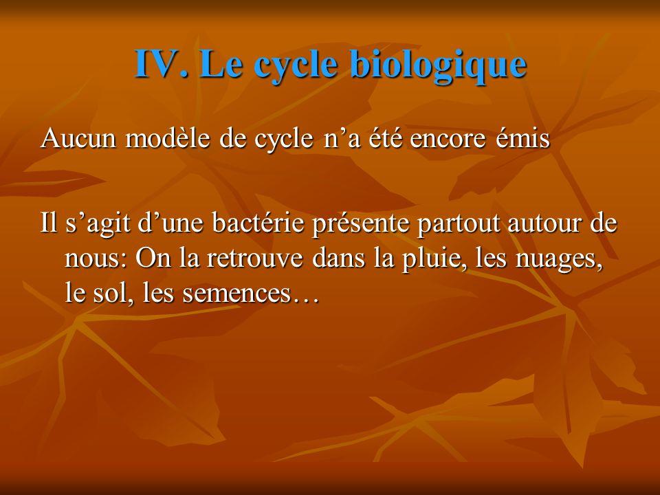 IV. Le cycle biologique Aucun modèle de cycle n'a été encore émis Il s'agit d'une bactérie présente partout autour de nous: On la retrouve dans la plu