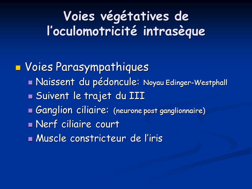 Voies végétatives de l'oculomotricité intrasèque Voies Parasympathiques Voies Parasympathiques Naissent du pédoncule: Noyau Edinger-Westphall Naissent