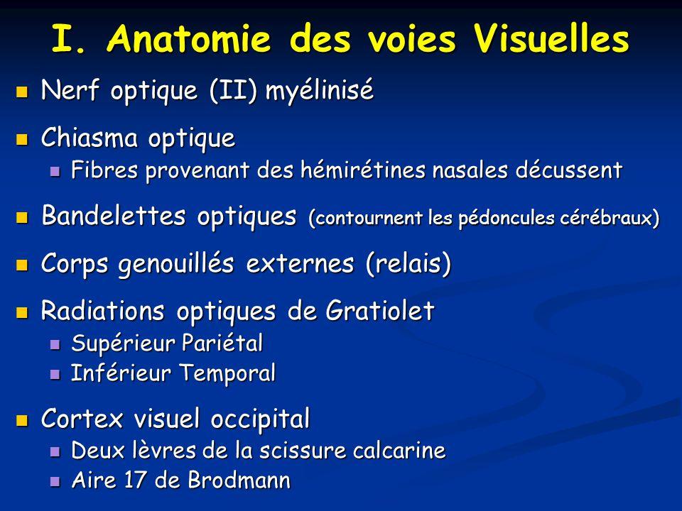 I. Anatomie des voies Visuelles Nerf optique (II) myélinisé Nerf optique (II) myélinisé Chiasma optique Chiasma optique Fibres provenant des hémirétin