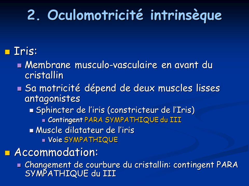 2. Oculomotricité intrinsèque Iris: Iris: Membrane musculo-vasculaire en avant du cristallin Membrane musculo-vasculaire en avant du cristallin Sa mot