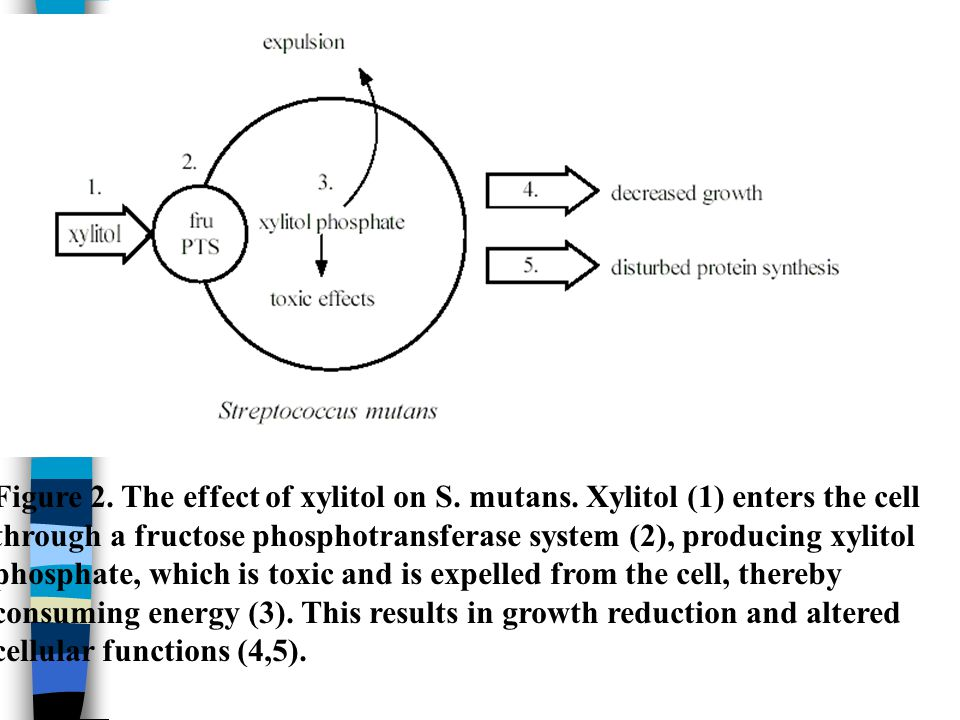 Figure 2. The effect of xylitol on S. mutans. Xylitol (1) enters the cell through a fructose phosphotransferase system (2), producing xylitol phosphat