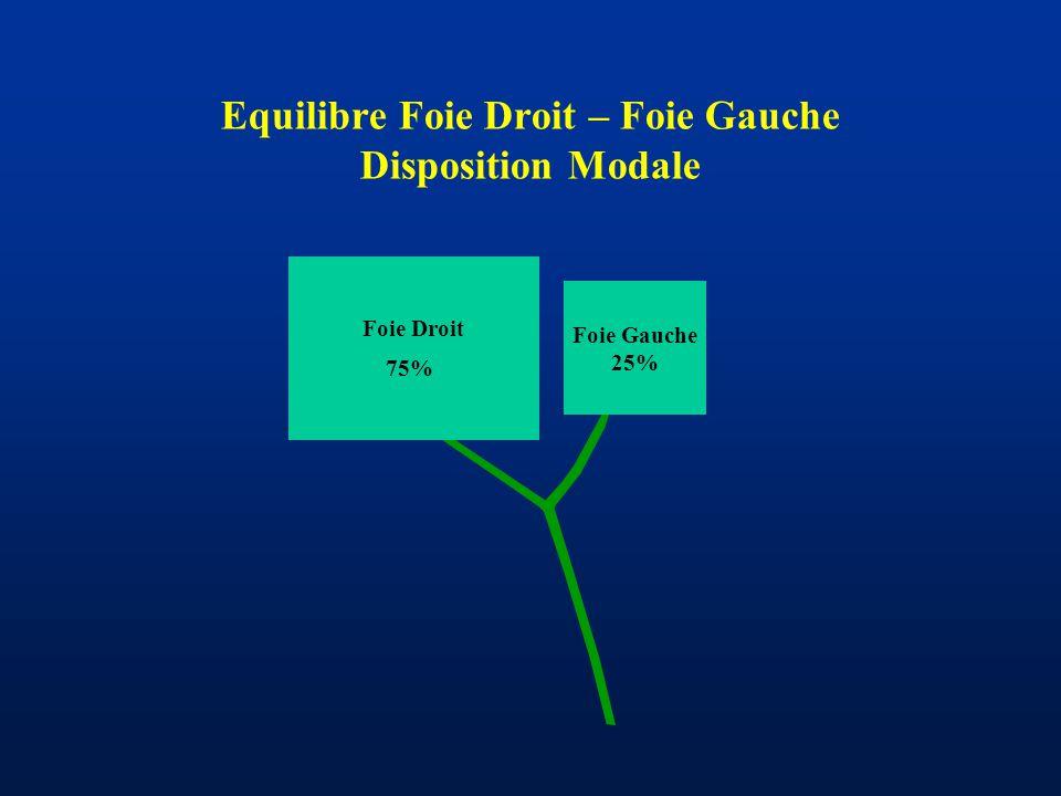 Equilibre Foie Droit – Foie Gauche Disposition Modale Foie Gauche 25% Foie Droit 75%