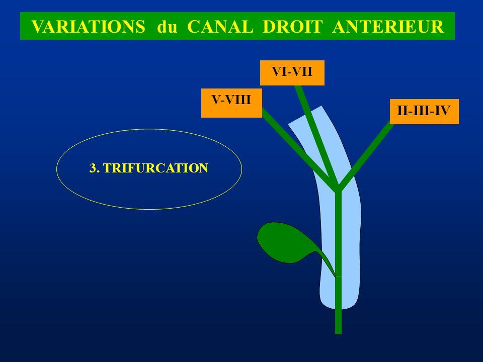 II-III-IV VI-VII 3. TRIFURCATION V-VIII VARIATIONS du CANAL DROIT ANTERIEUR