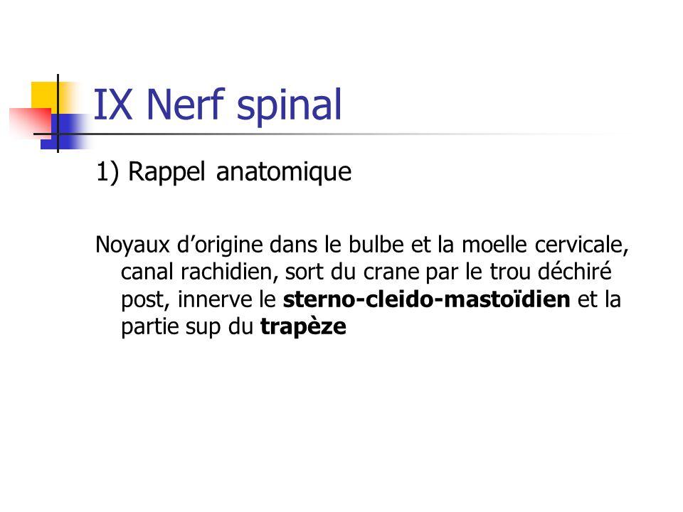IX Nerf spinal 1) Rappel anatomique Noyaux d'origine dans le bulbe et la moelle cervicale, canal rachidien, sort du crane par le trou déchiré post, in