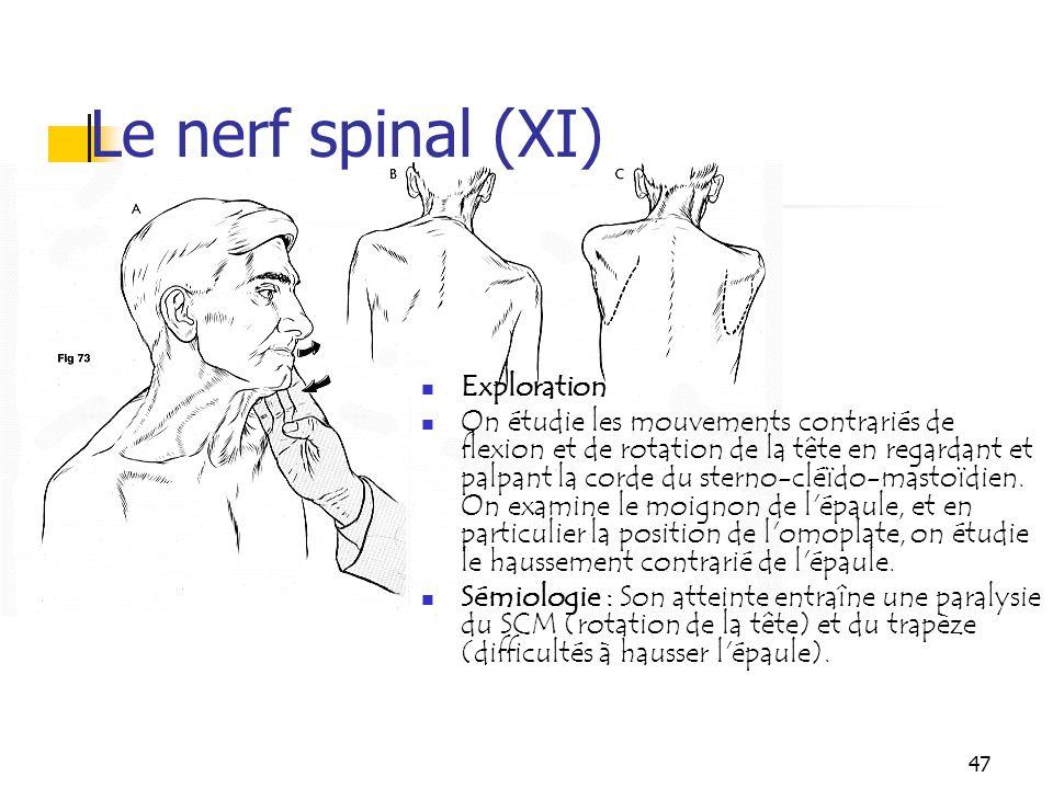 47 Le nerf spinal (XI) Exploration On étudie les mouvements contrariés de flexion et de rotation de la tête en regardant et palpant la corde du sterno