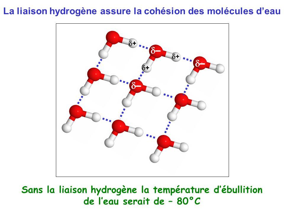 La liaison hydrogène assure la cohésion des molécules d'eau Sans la liaison hydrogène la température d'ébullition de l'eau serait de – 80°C