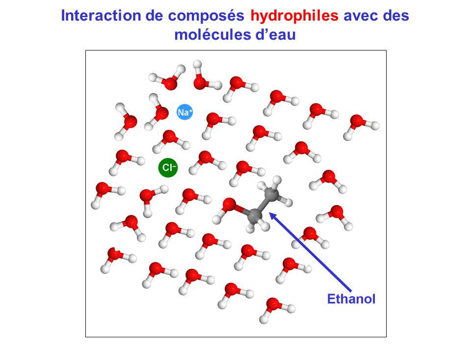 Interaction de composés hydrophiles avec des molécules d'eau
