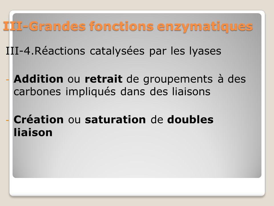 III-Grandes fonctions enzymatiques III-4.Réactions catalysées par les lyases - Addition ou retrait de groupements à des carbones impliqués dans des liaisons - Création ou saturation de doubles liaison
