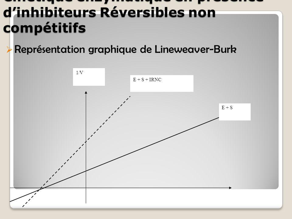 Cinétique enzymatique en présence d'inhibiteurs Réversibles non compétitifs  Représentation graphique de Lineweaver-Burk 1/V E + S E + S + IRNC