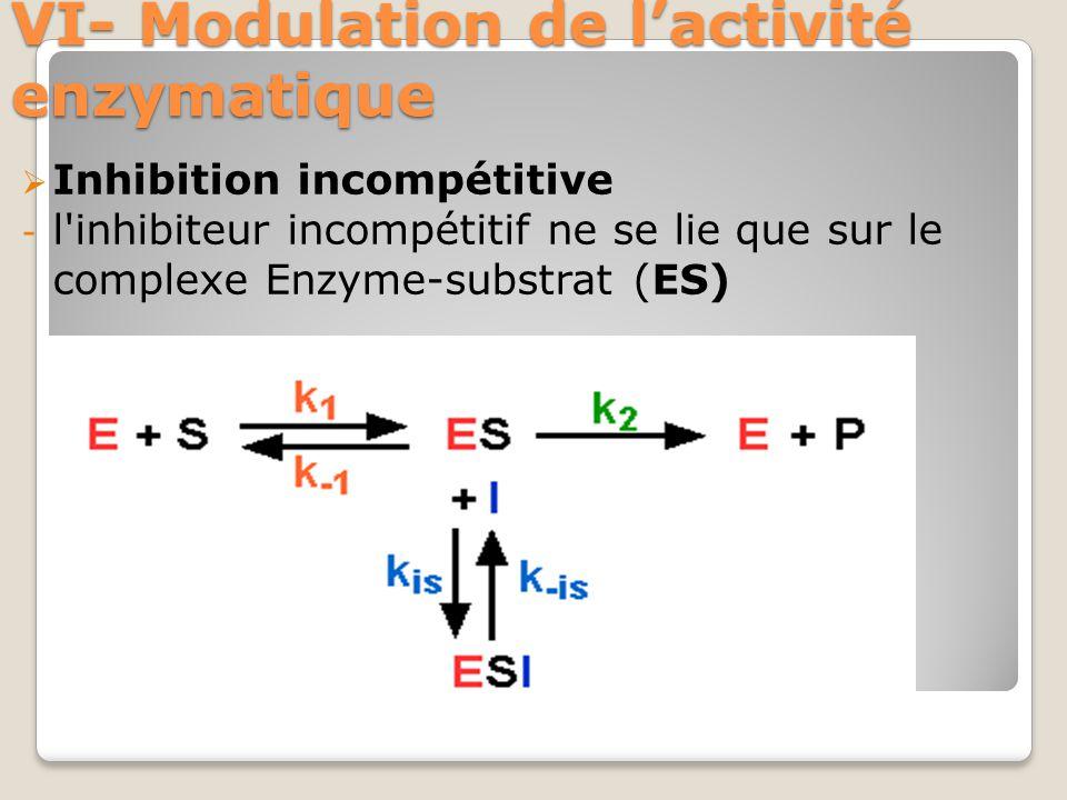 VI- Modulation de l'activité enzymatique  Inhibition incompétitive - l inhibiteur incompétitif ne se lie que sur le complexe Enzyme-substrat (ES)