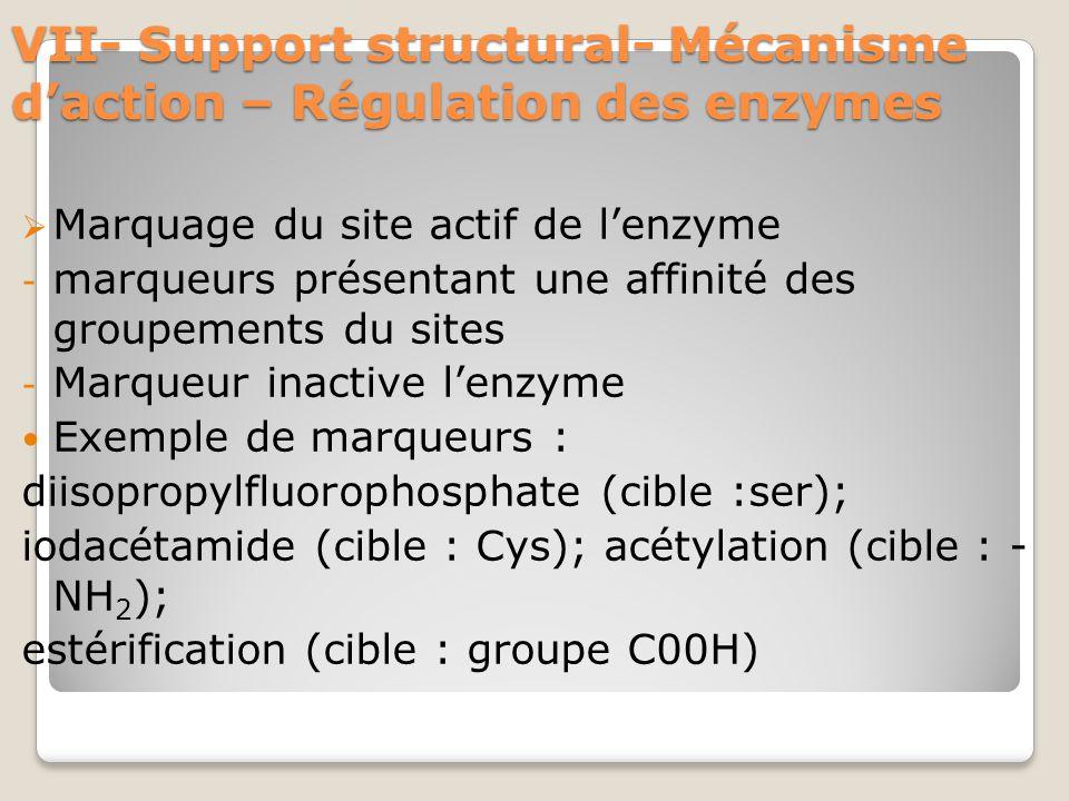 VII- Support structural- Mécanisme d'action – Régulation des enzymes  Marquage du site actif de l'enzyme - marqueurs présentant une affinité des groupements du sites - Marqueur inactive l'enzyme Exemple de marqueurs : diisopropylfluorophosphate (cible :ser); iodacétamide (cible : Cys); acétylation (cible : - NH 2 ); estérification (cible : groupe C00H)