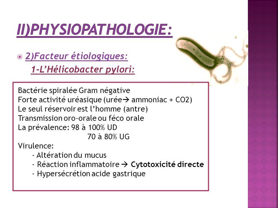  2)Facteur étiologiques: 1-L'Hélicobacter pylori: Bactérie spiralée Gram négative Forte activité uréasique (urée  ammoniac + CO2) Le seul réservoir