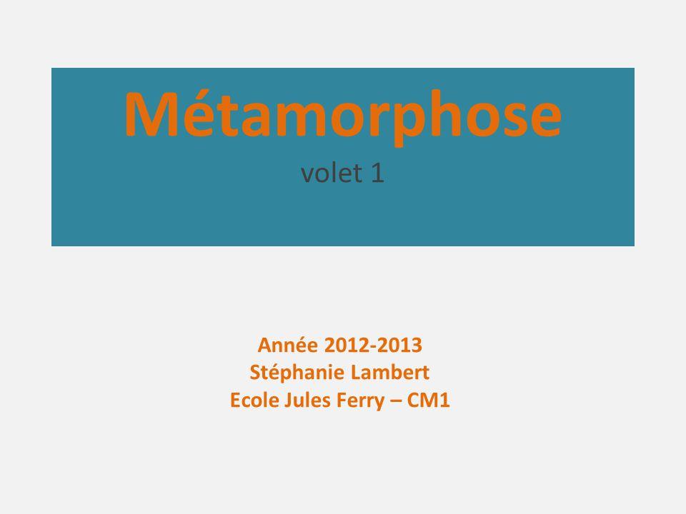 Métamorphose volet 1 Année 2012-2013 Stéphanie Lambert Ecole Jules Ferry – CM1